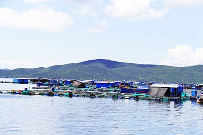Khánh Hòa: Vùng quy hoạch nuôi trồng thủy sản quá tải
