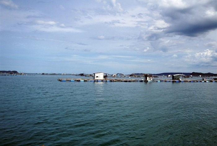 Cảnh báo môi trường nuôi thủy sản Sông Cầu