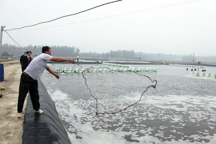 Hải Châu phát triển nghề nuôi trồng, khai thác thủy sản