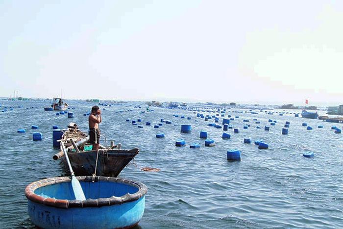 Chia sẻ kinh nghiệm phát triển ngành Nuôi biển công nghiệp