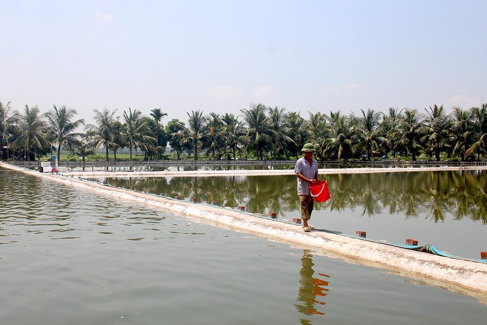 Quảng Yên: Hỗ trợ nông dân vay vốn phát triển nuôi trồng thủy sản