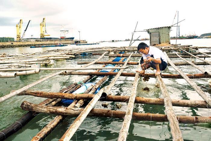 Cần hỗ trợ người dân khi tháo dỡ lồng bè nuôi thủy sản ở Bình Sơn