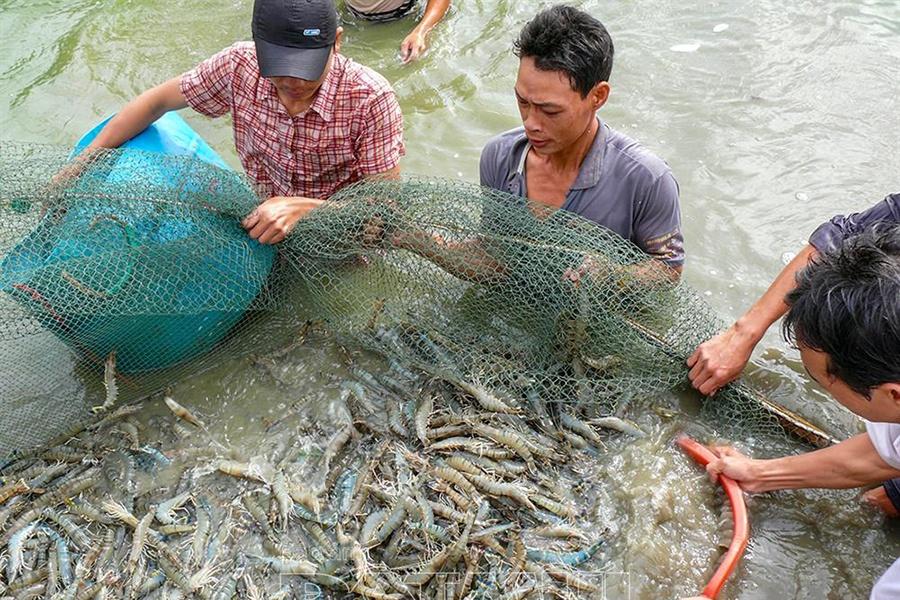 Tổng sản lượng thủy sản trong tháng 7 ước đạt 740,5 nghìn tấn
