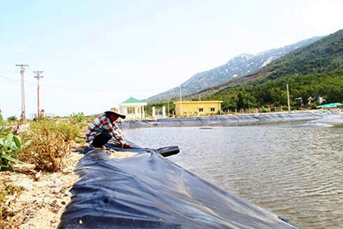 Khánh Hòa: Toàn tỉnh có 427 cơ sở sản xuất, ương giống thủy sản
