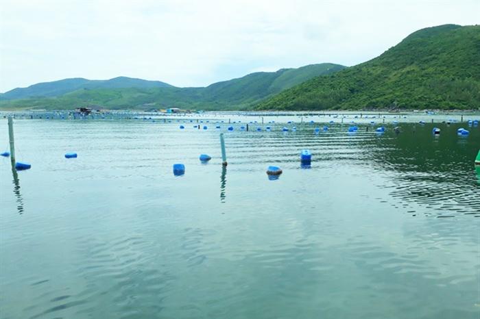 Cảnh báo môi trường nuôi thủy sản Phú Yên