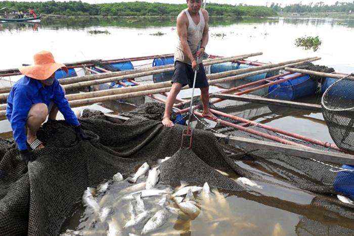 Nguyên nhân ban đầu khiến hơn 100 tấn cá chết ở Hà Tĩnh