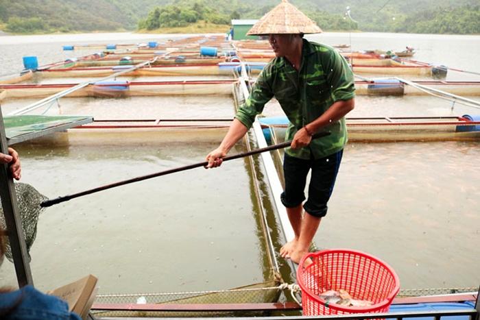 Cát Tiên: Cá nuôi lồng bè chết hàng loạt là do nhiễm khuẩn đường ruột