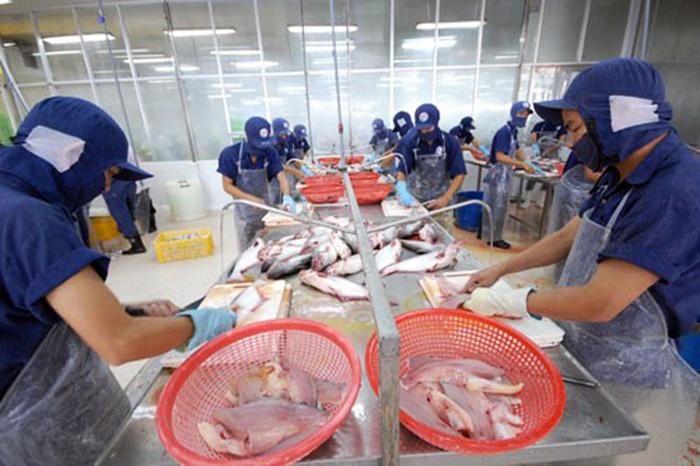 Giá cá tra dao động ở mức 21.000- 22.000 đ/kg