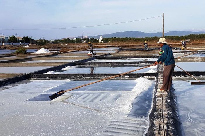 Vụ muối 2019 Bình Định: Lại được mùa, mất giá