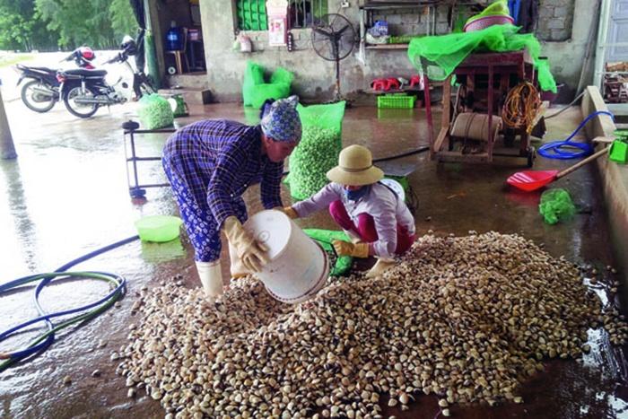 Liên kết hiệu quả trong nuôi trồng thủy sản Thanh Hóa