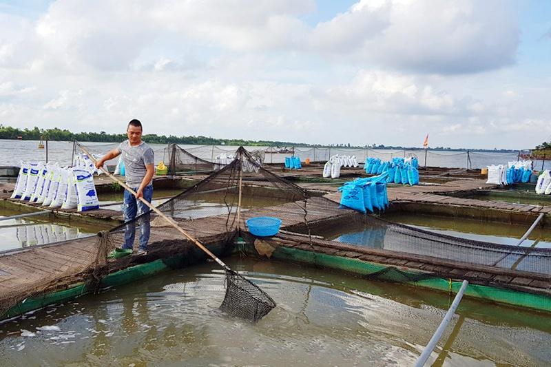 Thanh niên Nam Định làm giàu nhờ nuôi cá chép giòn