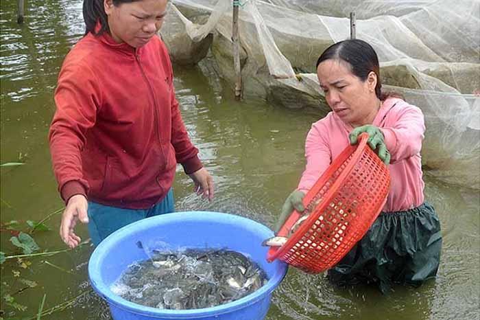 """Lãi """"khủng"""" nhờ nuôi cá nước ngọt"""