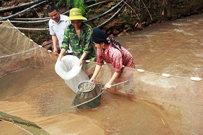 Mô hình nuôi cá giống ở Chiềng Đông