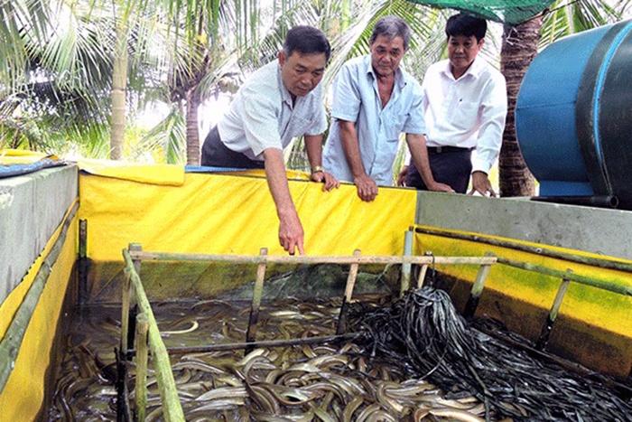 Cựu chiến với nghề nuôi lươn không bùn