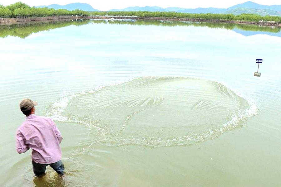 Toàn tỉnh Khánh Hòa thả nuôi 3.698ha thủy sản