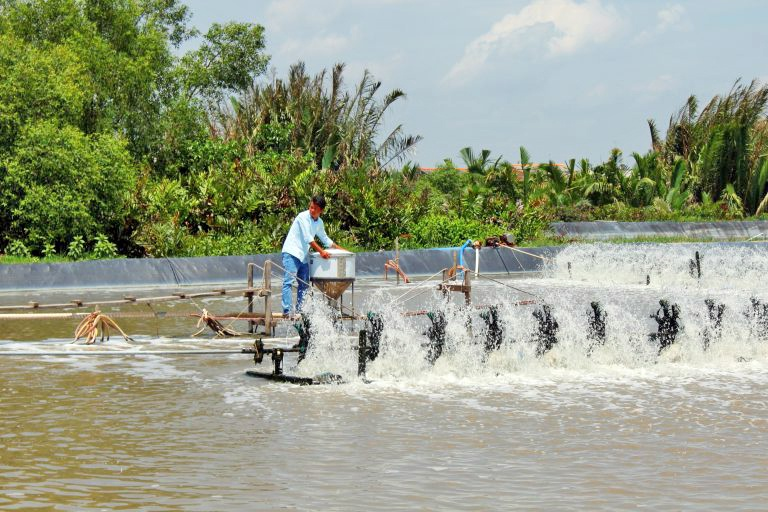 Nông dân Cần Đước thả tôm trên 1.500ha