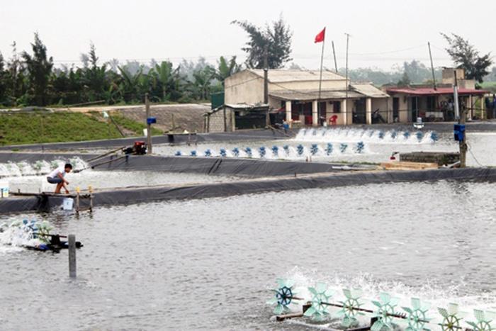 Phát triển nuôi trồng thủy sản ở xã Hoằng Phụ