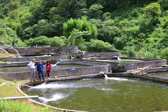 Khó khăn trong nuôi cá nước lạnh theo tiêu chuẩn VietGAP