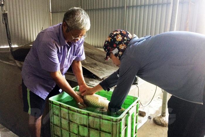 Trang trại cá giống Ninh Bình doanh thu 7 - 8 tỷ đồng/năm