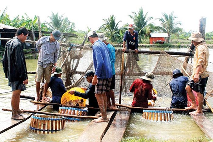 Giá cá tra nguyên liệu tăng nhẹ