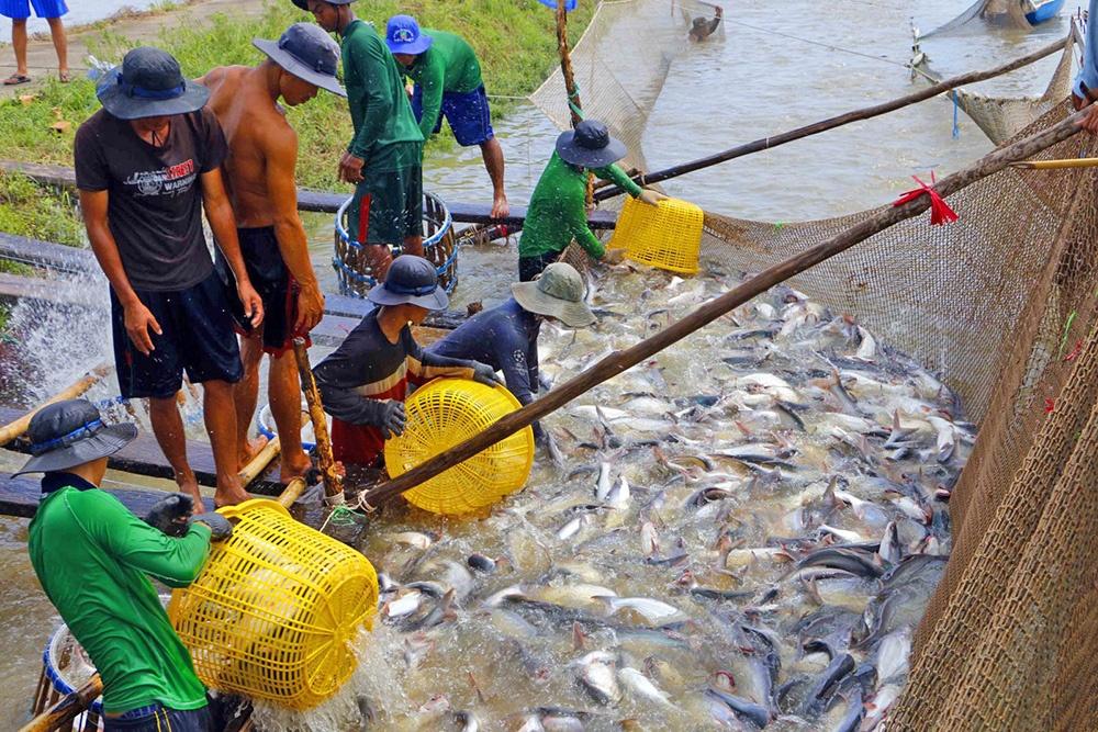 Dự báo xuất khẩu thủy sản những tháng cuối năm