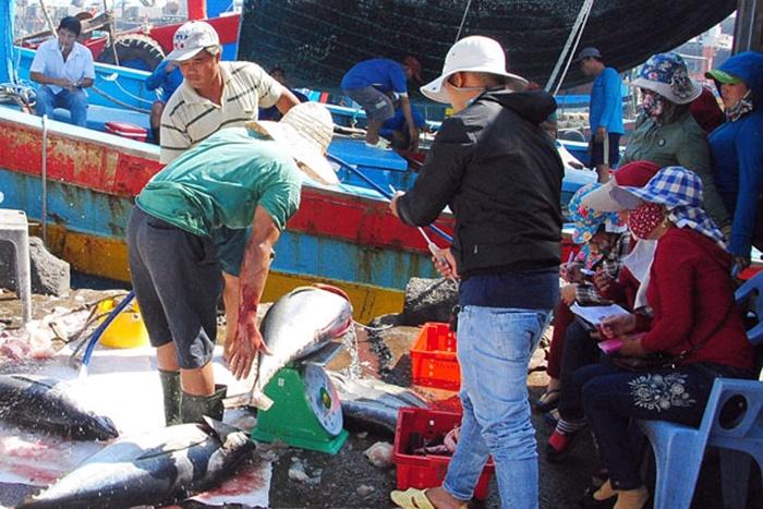 Xuất khẩu cá ngừ sang Trung Quốc bất ngờ sụt giảm