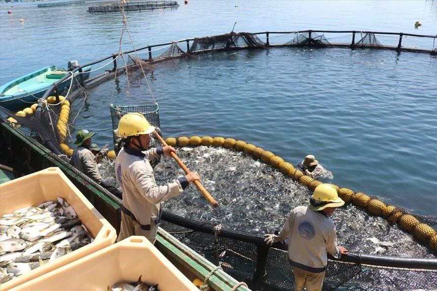Cần đẩy mạnh công nghiệp nuôi biển bền vững