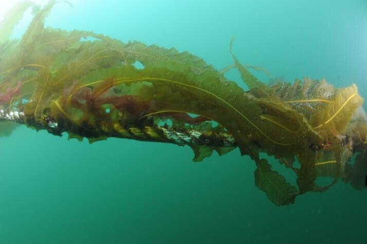 Rong biển