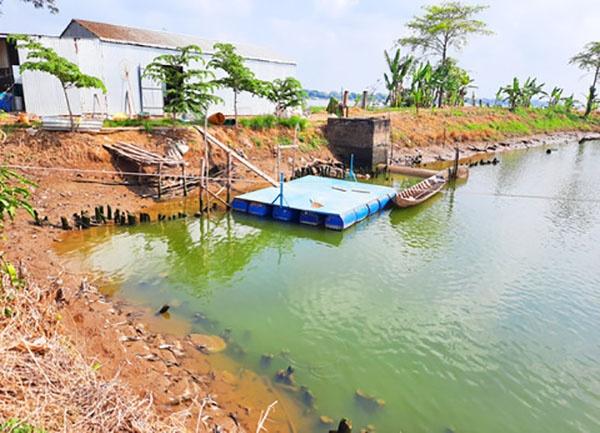 Ao nuôi bỏ hoang