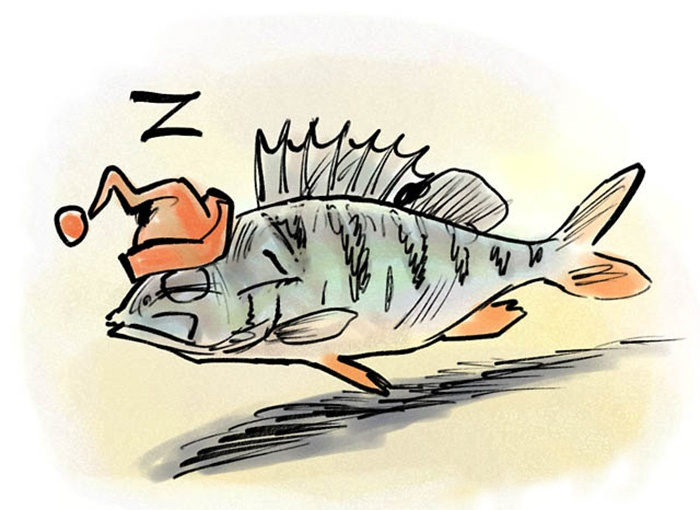 cá đi ngủ