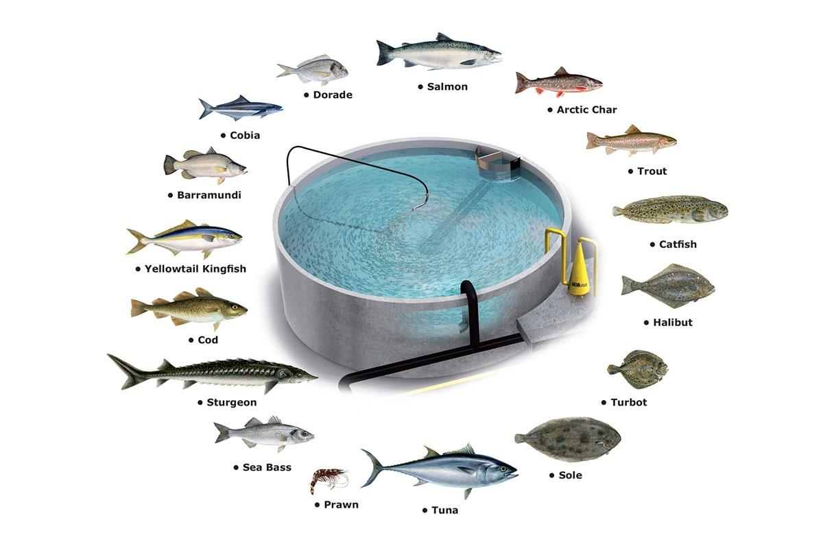 hệ thống nuôi thủy sản tuần hoàn RAS