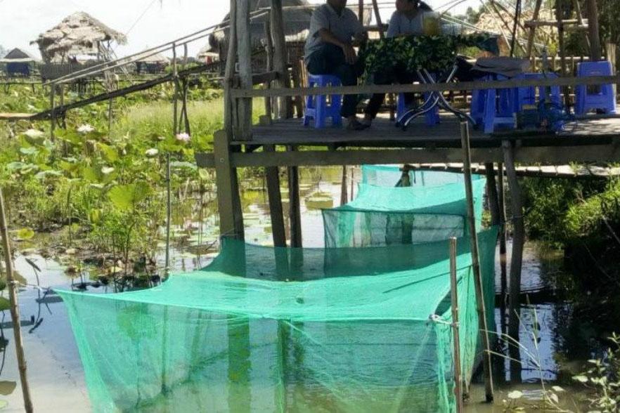 nuôi cá trong mùa lũ