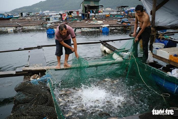 nuôi cá lồng