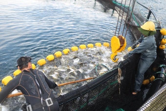Trang trại nuôi biển
