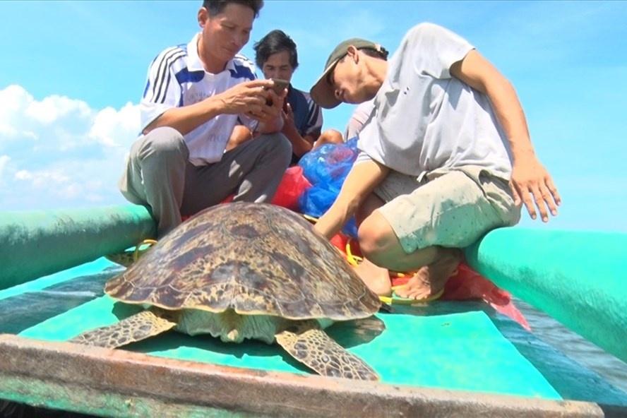 thả rùa biển