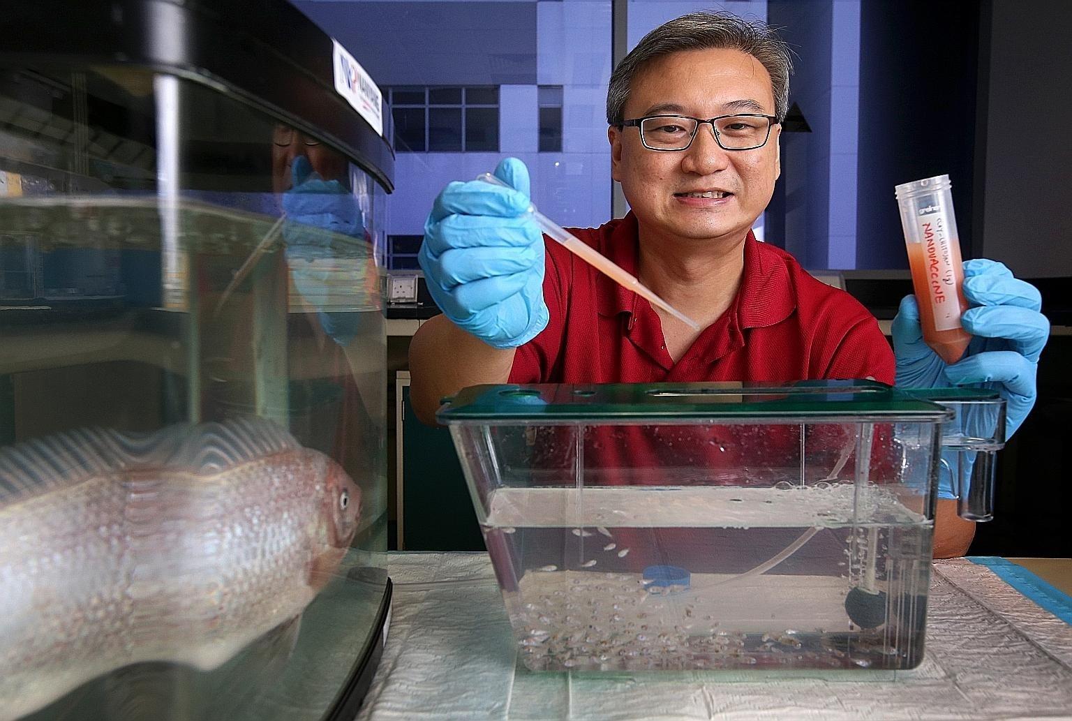 vaccine đường uống cho cá