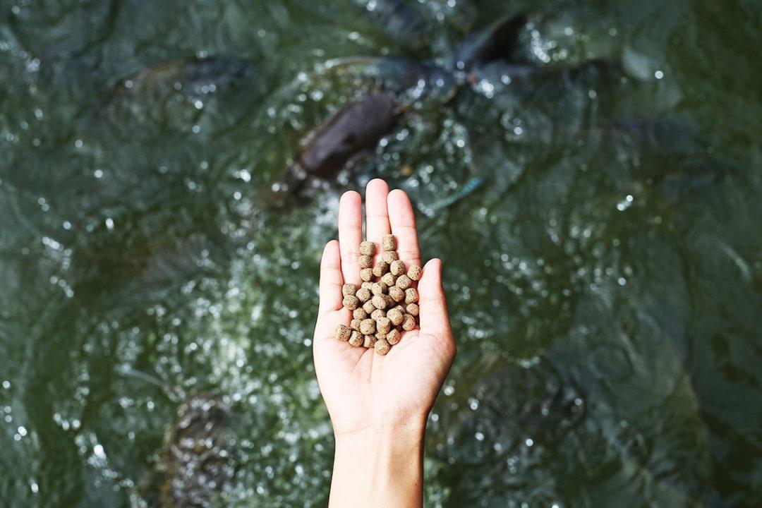 thức ăn thủy sản