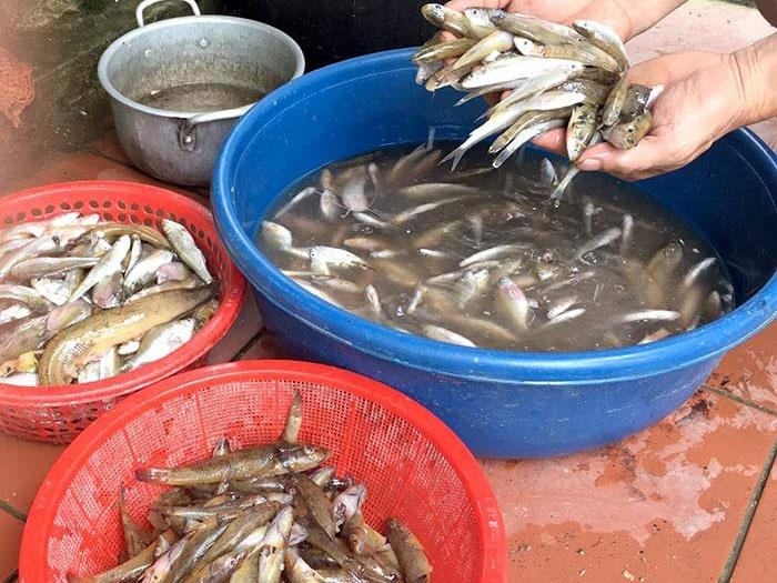 Cá bống suối là một trong những đặc sản của tỉnh Tuyên Quang.