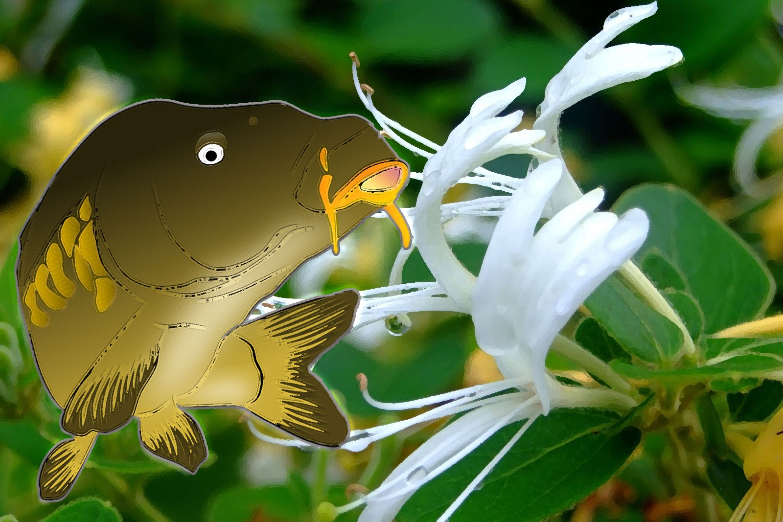 trị bệnh cá chép