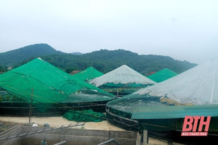 Mô hình nuôi tôm công nghiệp 2 giai đoạn tại xã Hoằng Yến (Hoằng Hóa).