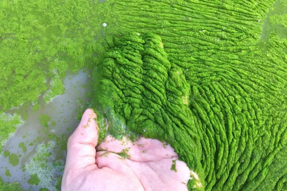 tảo tàn