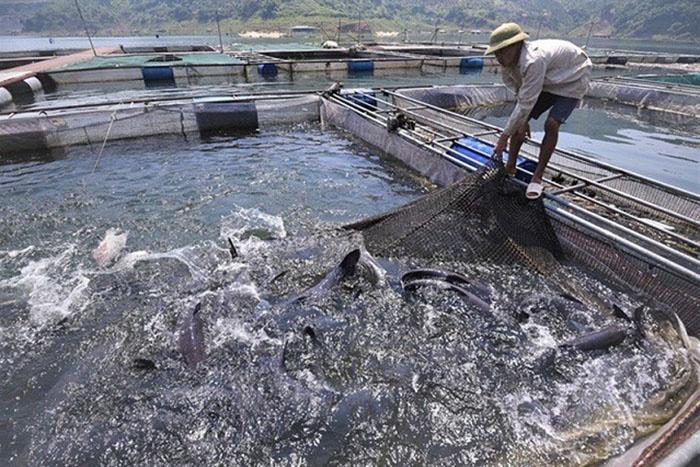 HTX Thủy sản Hồ Quỳnh.