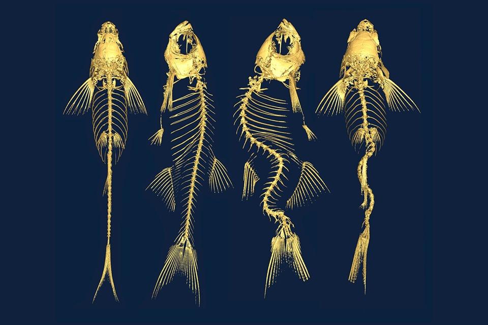 xương cá