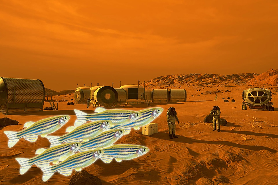 cá ngựa vằn trên sao hỏa