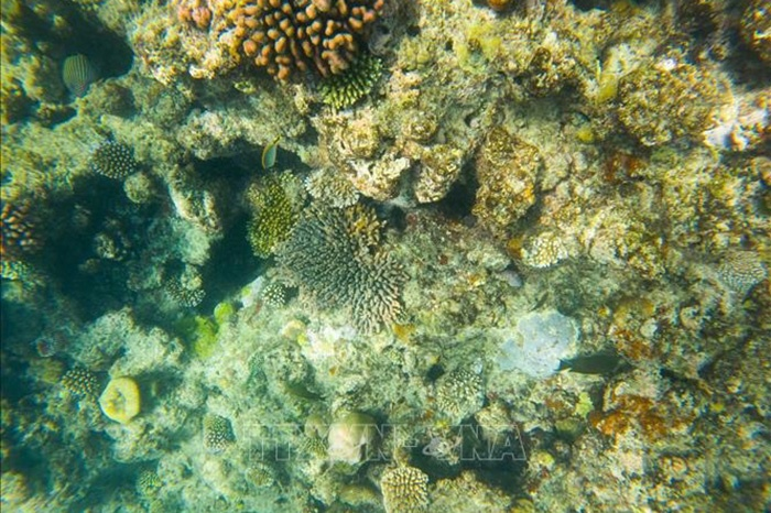 Rạn san hô Great Barrier.