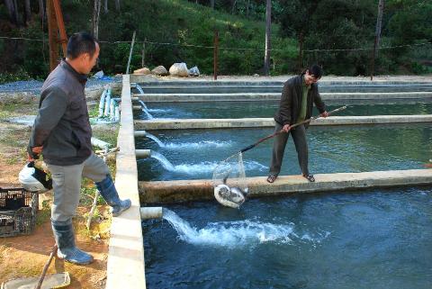 Một mô hình nuôi cá hồi ở Tây Nguyên