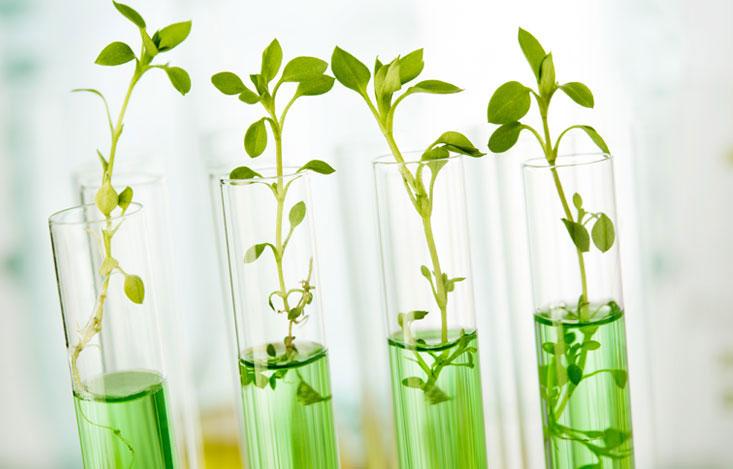 Thực vật biến đổi gen chìa khóa cho nguồn cung Omega-3 thủy sản