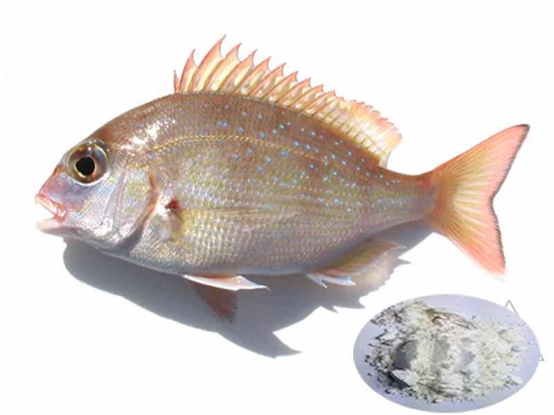 Guanosine monophosphate với miễn dịch cá tráp