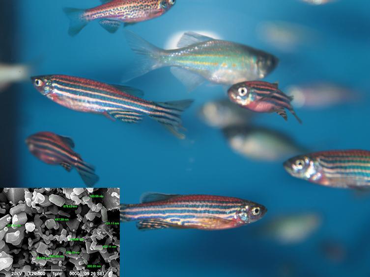 Nano kẽm oxide: Trị bệnh cho cá ở cấp độ phân tử