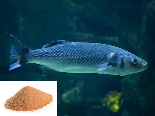 Cẩn trọng khi bổ sung tannin vào thức ăn thủy sản